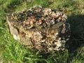 7093 Log & fungus
