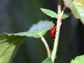 Beetles 7