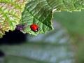 Beetles 5