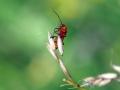 Beetles 3