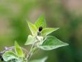 Beetles 6