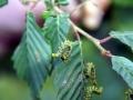 Caterpillars 2