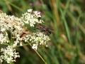 Flies 2