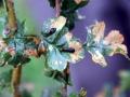 Hoverflies-Sawflies 3