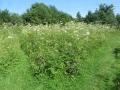9236 - Meadow
