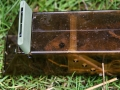Mammal Trapping 2009 7