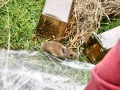 Mammal Trapping 2009 15