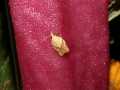 Moth Evening 2007 7