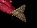 Moth Evening 2007 8