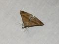 Moth Evening 2011prt2 3