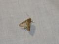 Moth Evening 2011prt2 9