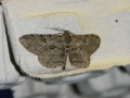 Moth Evening 2011prt2 8