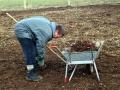 Planting Jan 2006 5