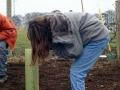 Planting Jan 2006 11