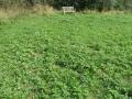 9445 - Meadow