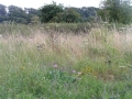 View towards Bridleway