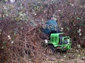 Tackle the brambles 05