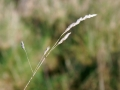 Unknown Grasses 1