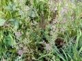 Unknown Grasses 4
