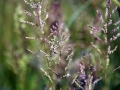 Unknown Grasses 5