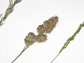 Unknown Grasses 14