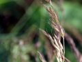 Unknown Grasses 7